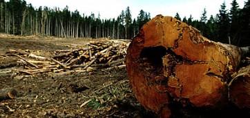 Disboscamento nel Mondo