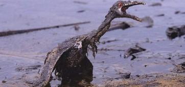 Uccello nel petrolio