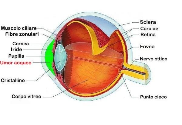 la struttura oculare e i difetti funzionali della vista. Black Bedroom Furniture Sets. Home Design Ideas